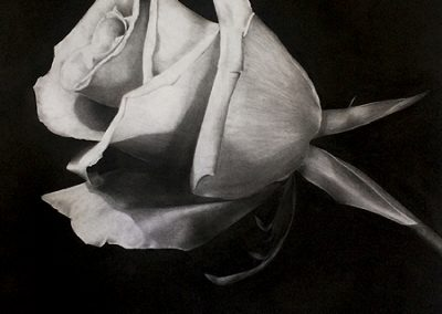 rosenrot 1